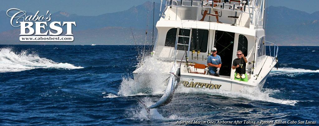 Fishing in cabo marlin dorado tuna wahoo fishing in for Cabo san lucas fishing season